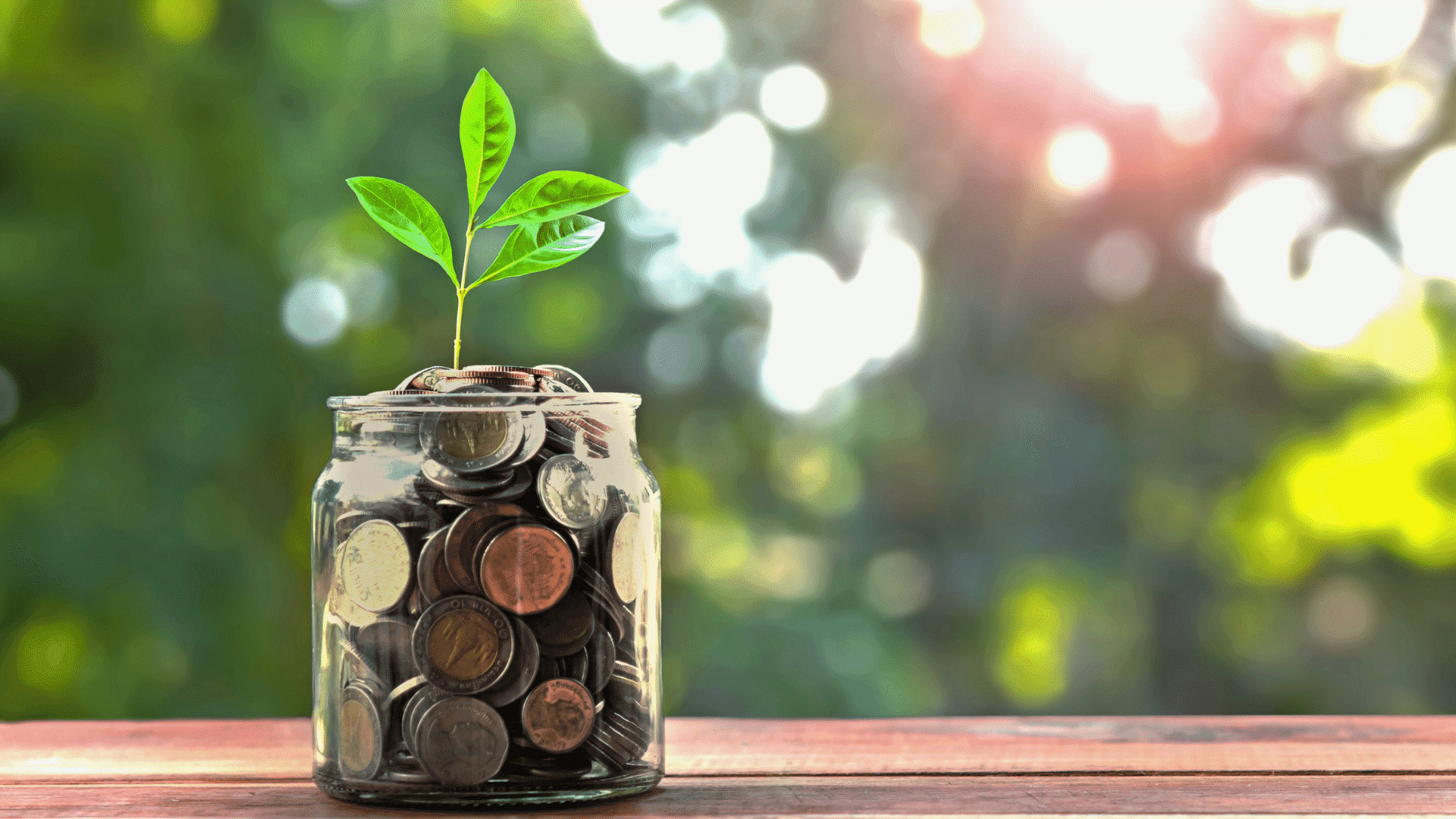 money tree in a jar of coins